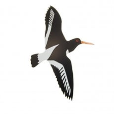 New Zealand Oyster Catcher Large-new-in-The Vault