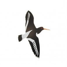 New Zealand Oyster Catcher Medium-artists-and-brands-The Vault
