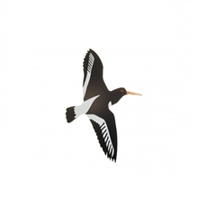 New Zealand Oyster Catcher Small-shop-all-The Vault