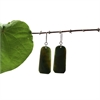 Pounamu Earrings-new-in-The Vault