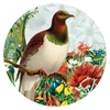 Art Spot Botanical Kereru-home-The Vault