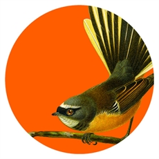 Large Art Spot Fantail Orange-wall-art-and-prints-The Vault