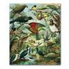 Tea Towel NZ Native Birds-artists-The Vault