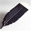 Huia Feather Black and White Small-home-The Vault