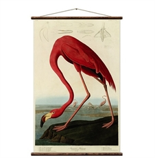 Flamingo Large 800mm wide Wall Chart-wall-art-and-prints-The Vault