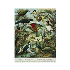 Native Birds of NZ A2 Print-wall-art-and-prints-The Vault