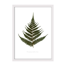Green Silver Fern Print Small Framed Wh-house-The Vault