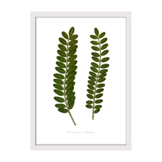 Kowhai Print Small Framed White-house-The Vault