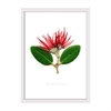 Pohutukawa Print Small Framed Wh-home-The Vault