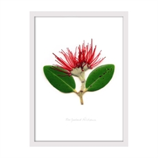 Pohutukawa Portrait Print Sl Framed Wh-house-The Vault