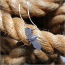 NZ Short Tailed Dangly Bat Stg Necklace