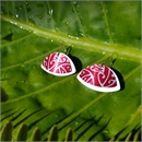 Alum Koru Poh Double Hook Earrings Ruby