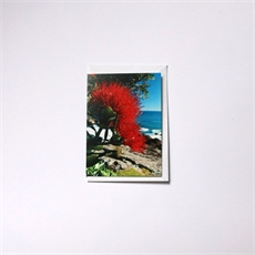 Coastal Pohutukawa Small Card-cards-The Vault