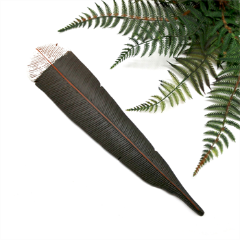 Huia Feather Wall Art