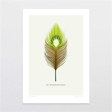 Kiwi Feather A4 Print-new-The Vault