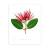 Pohutukawa Portrait Print Small-home-The Vault