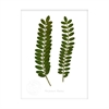 Kowhai Flora Print Small-home-The Vault